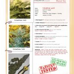 Strain Report: Colombian Gold