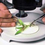 Unlocking the Secrets, Advanced Tissue Culture