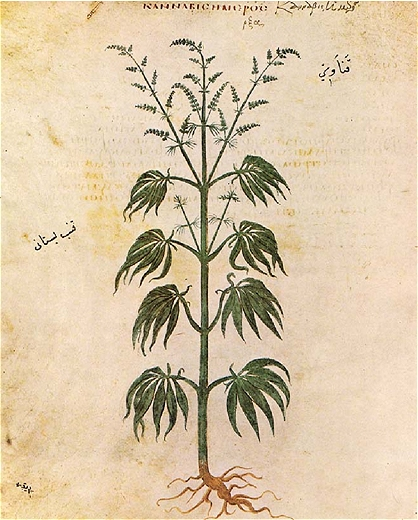 A History of Medical Cannabis